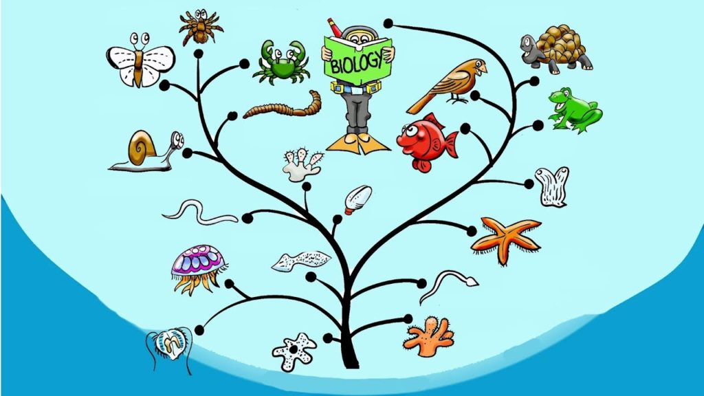 Как можно быстро выучить биологию. reshaemonline.com
